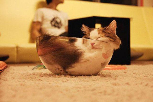 13 Animale care dorm in cele mai trasnite pozitii - Poza 11