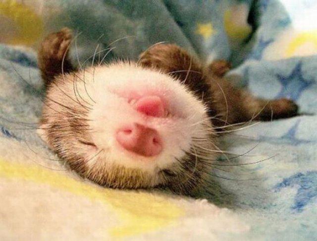 13 Animale care dorm in cele mai trasnite pozitii - Poza 6