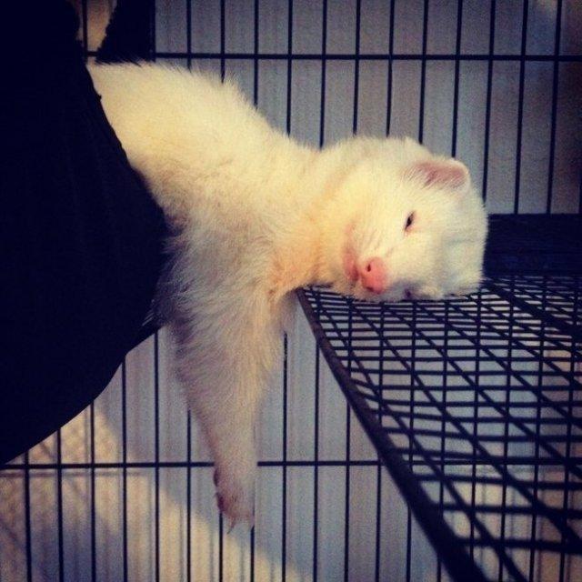 13 Animale care dorm in cele mai trasnite pozitii - Poza 13
