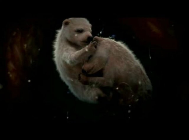 11 Animale care prin viata in pantecul mamelor - Poza 1