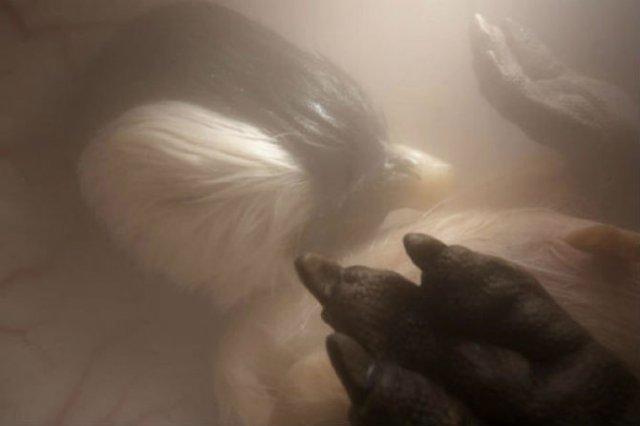 11 Animale care prin viata in pantecul mamelor - Poza 8