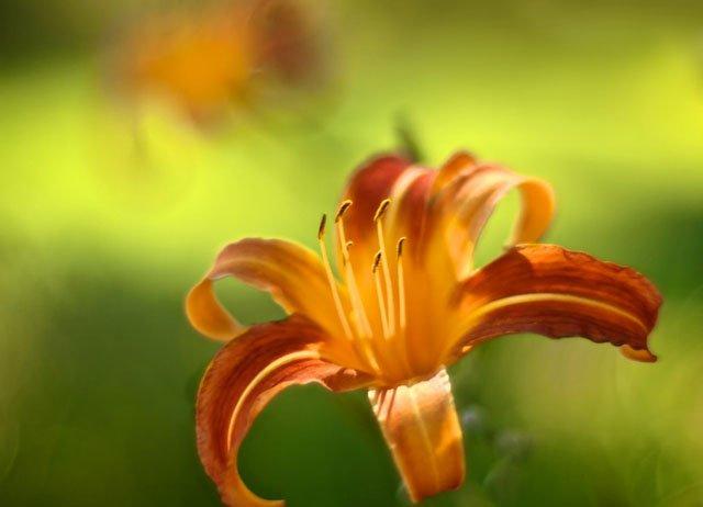 30 de poze cu flori minunate - Poza 2