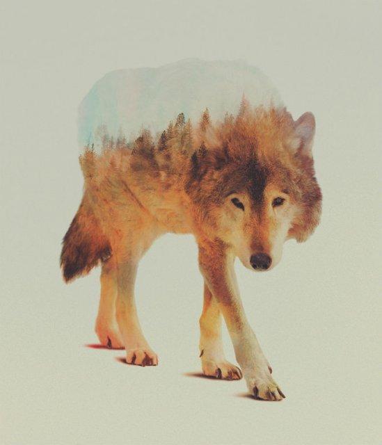 Frumuseti ireale: Cum se oglindeste natura pe trupul animalelor salbat - Poza 2