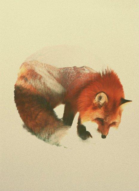 Frumuseti ireale: Cum se oglindeste natura pe trupul animalelor salbat - Poza 3