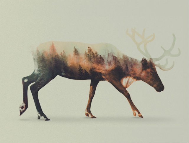 Frumuseti ireale: Cum se oglindeste natura pe trupul animalelor salbat - Poza 4