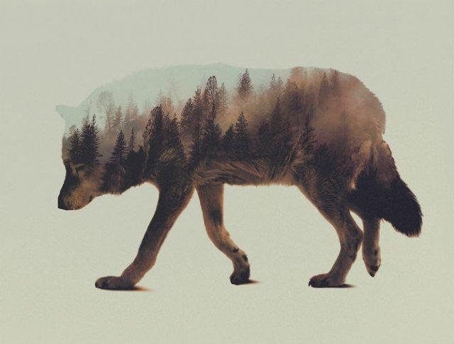 Frumuseti ireale: Cum se oglindeste natura pe trupul animalelor salbat - Poza 6