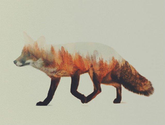 Frumuseti ireale: Cum se oglindeste natura pe trupul animalelor salbat - Poza 7