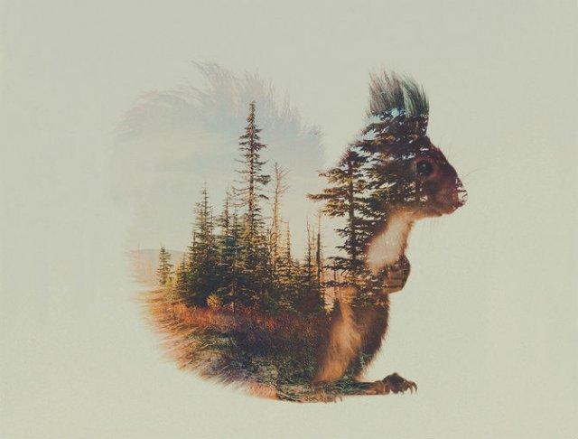 Frumuseti ireale: Cum se oglindeste natura pe trupul animalelor salbat - Poza 8