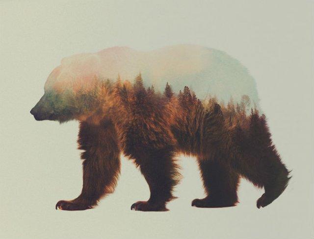 Frumuseti ireale: Cum se oglindeste natura pe trupul animalelor salbat - Poza 9
