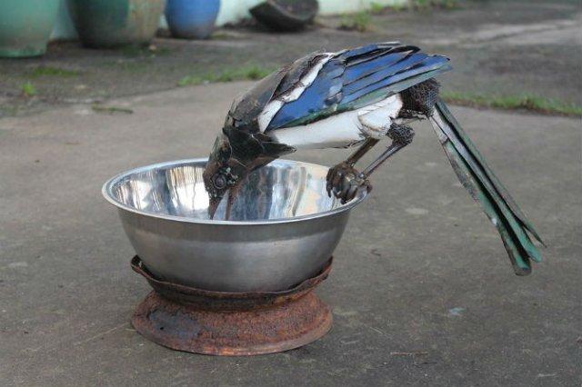 Oximoron artistic: Insecte si pasari metalice, cu John Brown - Poza 3