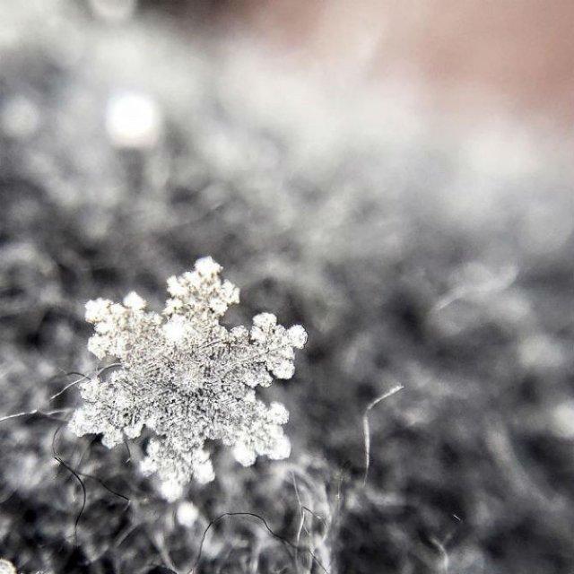 Magia fulgilor de nea in poze de poveste - Poza 4
