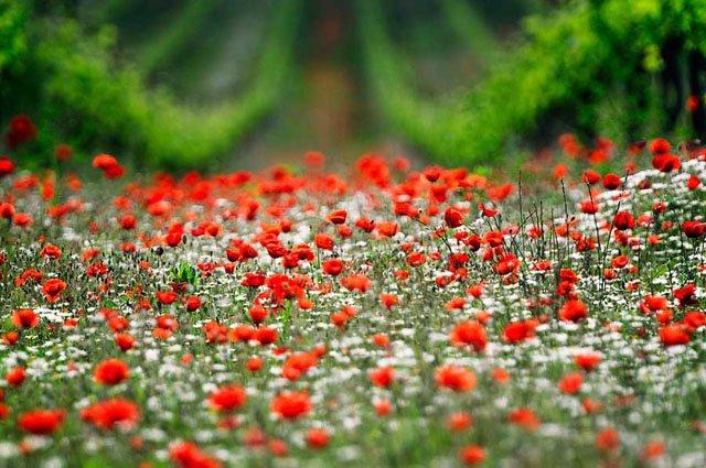 30 de poze cu flori minunate - Poza 4