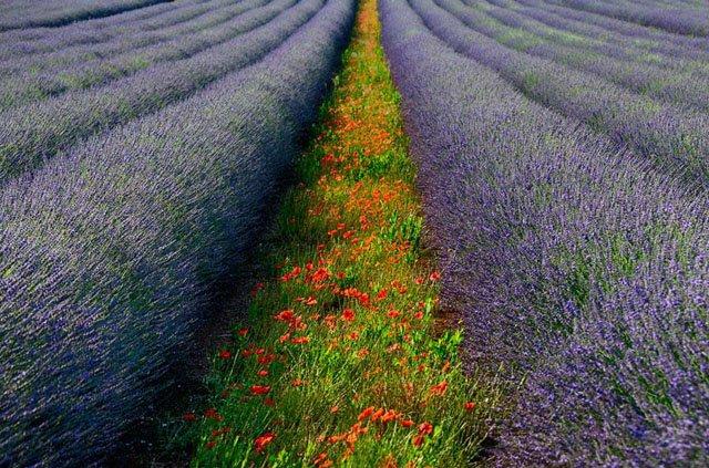 30 de poze cu flori minunate - Poza 5