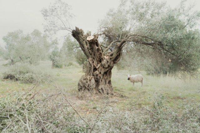 Momente de seninatate deplina, pe meleagurile Greciei - Poza 10
