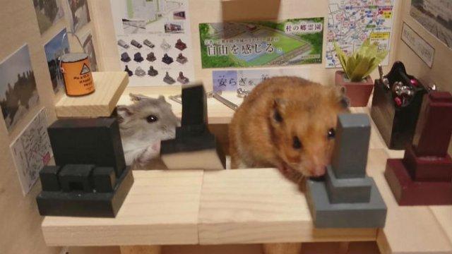 Lumea miniaturala a hamsterilor, in poze haioase - Poza 12