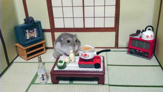 Lumea miniaturala a hamsterilor, in poze haioase - Poza 13