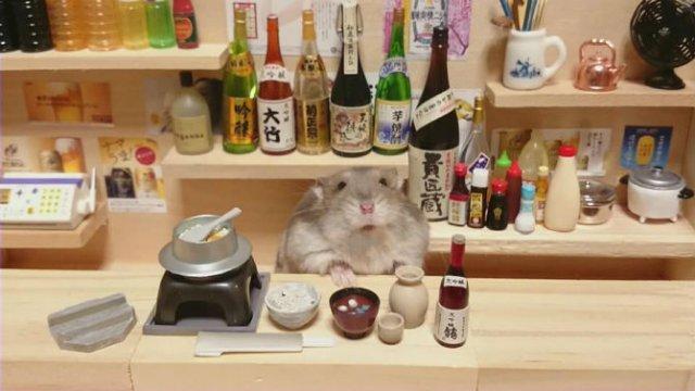 Lumea miniaturala a hamsterilor, in poze haioase - Poza 14