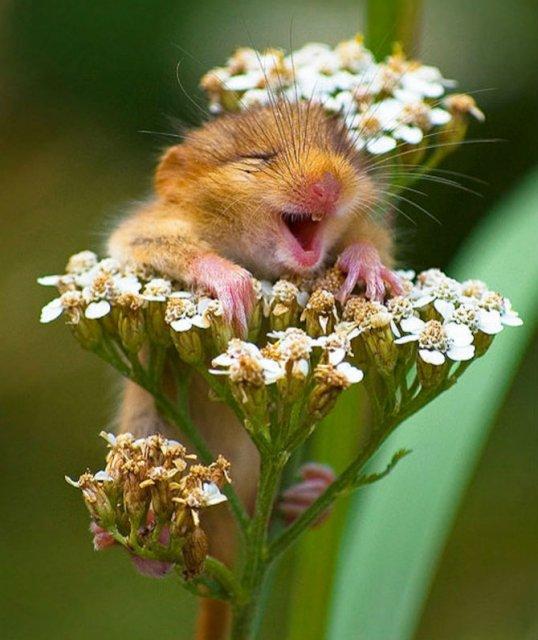 Cele mai fericite animale din lume care te fac sa zambesti - Poza 1