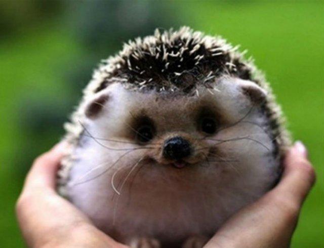 Cele mai fericite animale din lume care te fac sa zambesti - Poza 13