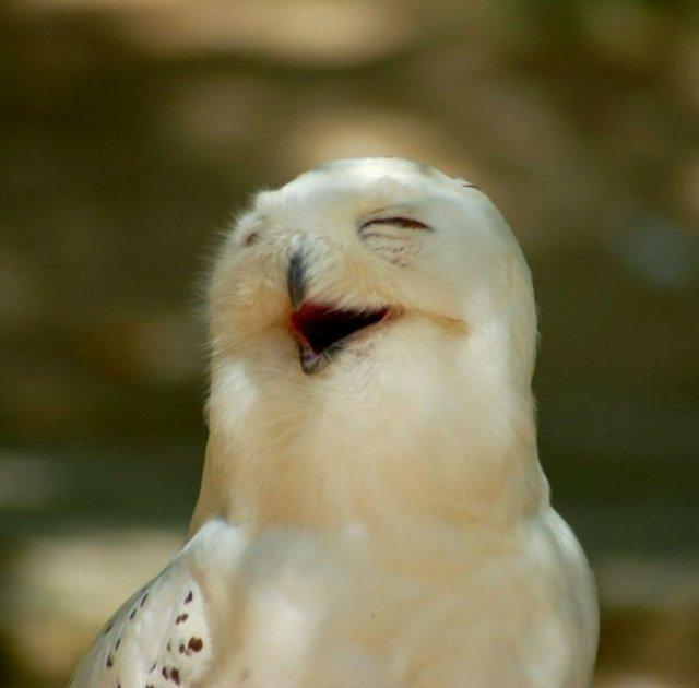 Cele mai fericite animale din lume care te fac sa zambesti - Poza 14