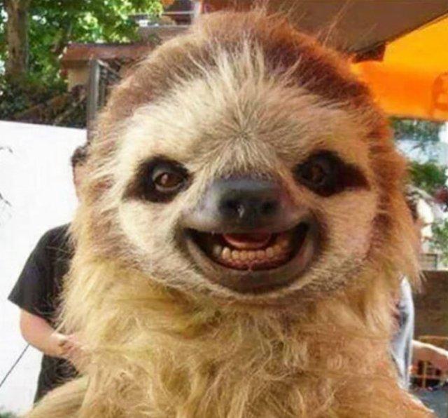 Cele mai fericite animale din lume care te fac sa zambesti - Poza 2
