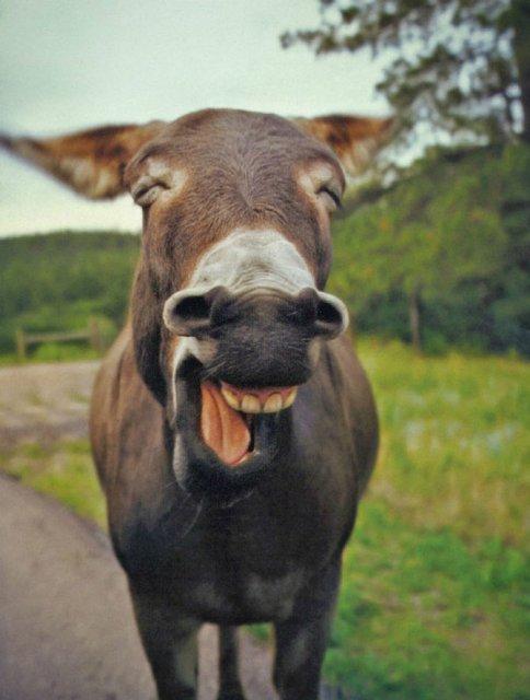 Cele mai fericite animale din lume care te fac sa zambesti - Poza 3