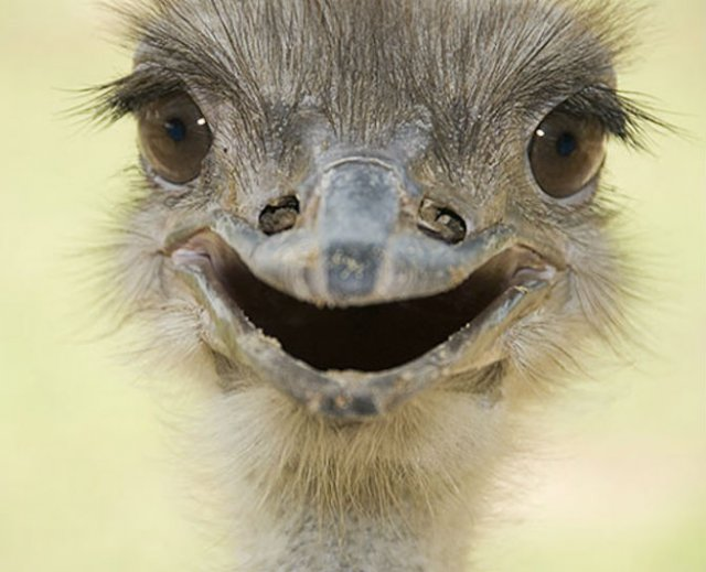 Cele mai fericite animale din lume care te fac sa zambesti - Poza 5