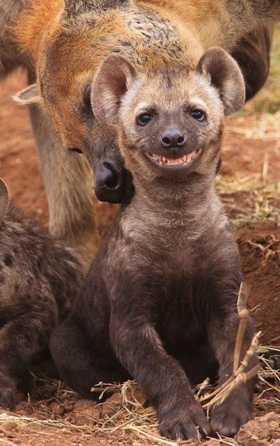Cele mai fericite animale din lume care te fac sa zambesti - Poza 6