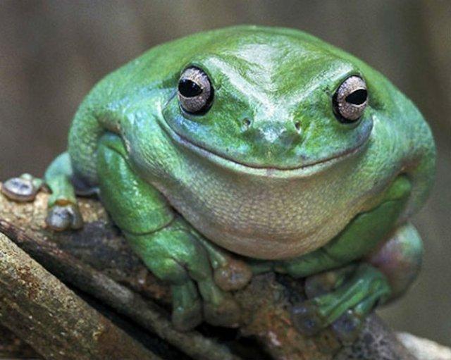 Cele mai fericite animale din lume care te fac sa zambesti - Poza 7