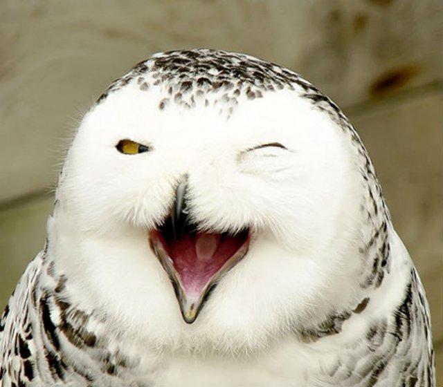 Cele mai fericite animale din lume care te fac sa zambesti - Poza 8