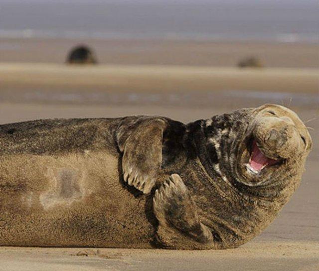 Cele mai fericite animale din lume care te fac sa zambesti - Poza 9