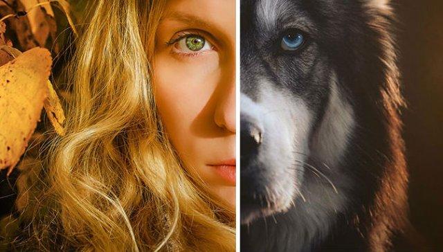 Povestea lui Kyro, un husky slavator - Poza 11