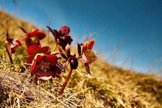 30 de poze cu flori minunate - Poza 8