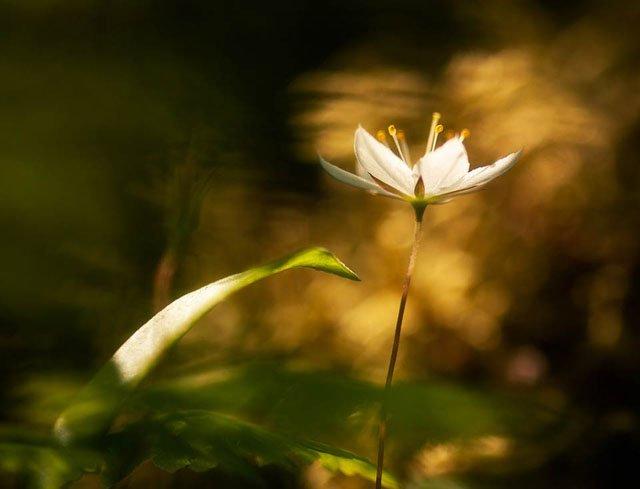 30 de poze cu flori minunate - Poza 9