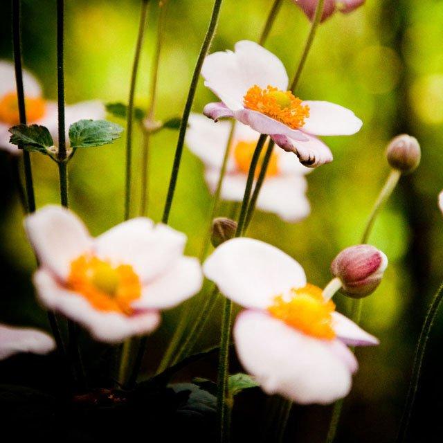 30 de poze cu flori minunate - Poza 10