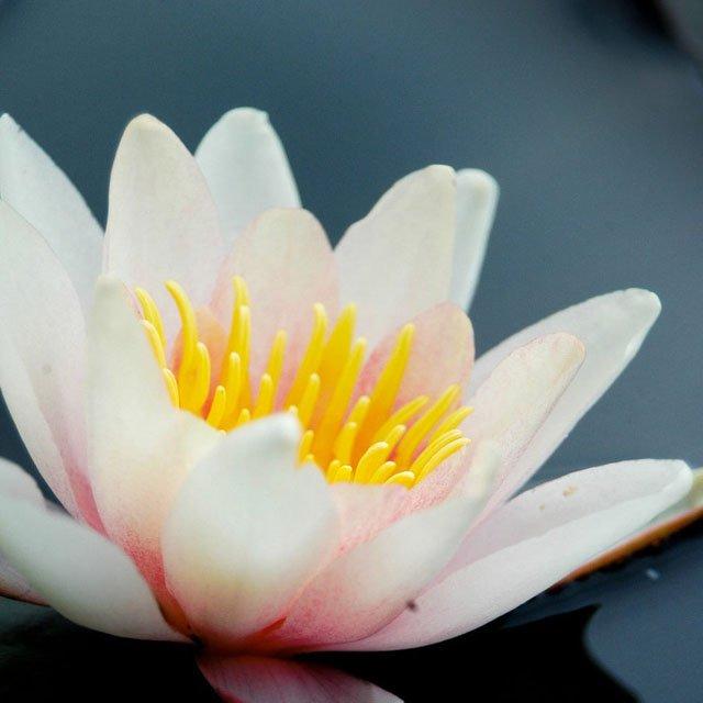 30 de poze cu flori minunate - Poza 11