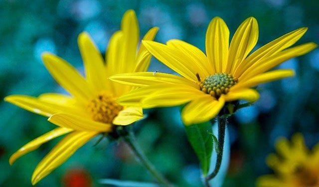 30 de poze cu flori minunate - Poza 13