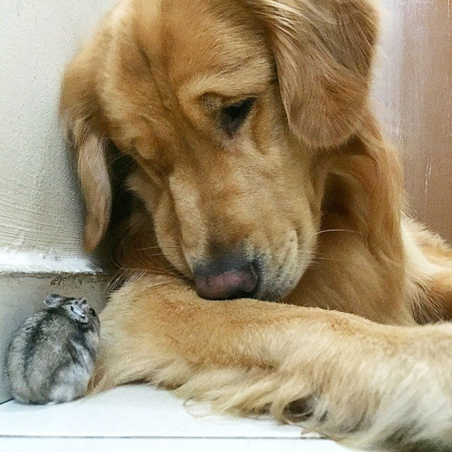 Un caine, opt pasari si un hamster - cea mai trasnita gasca de prieeni
