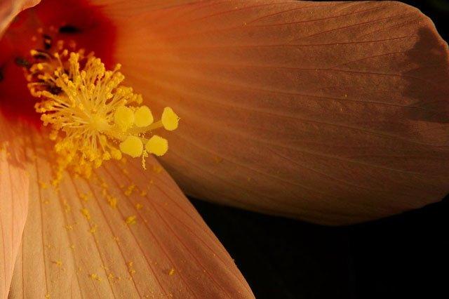 30 de poze cu flori minunate - Poza 15