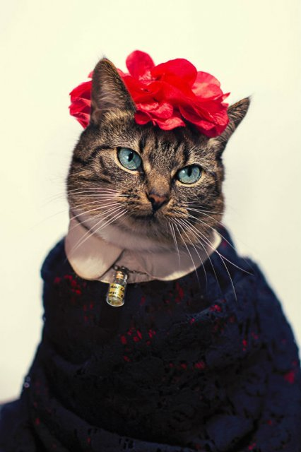 O pisica simpatica intr-un pictorial cu stil