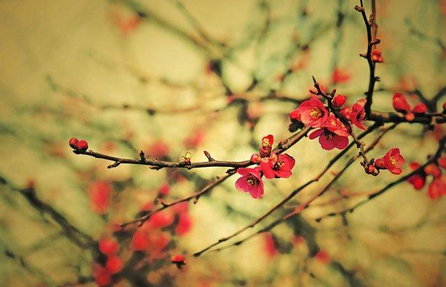 30 de poze cu flori minunate - Poza 16