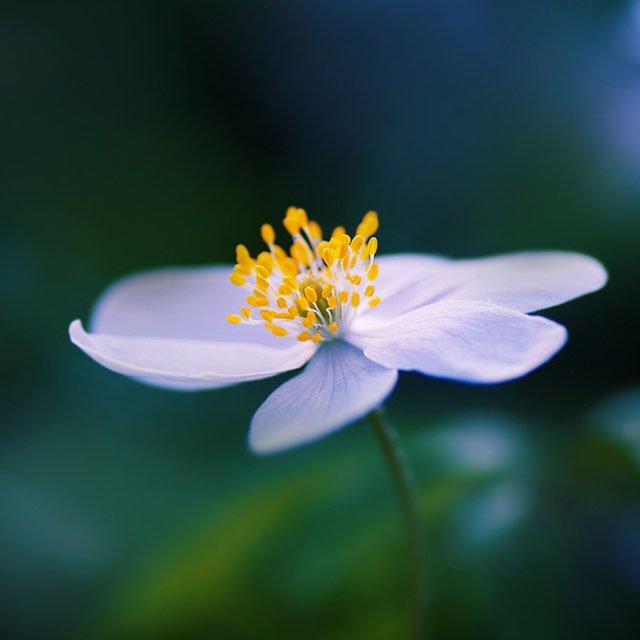 30 de poze cu flori minunate - Poza 18