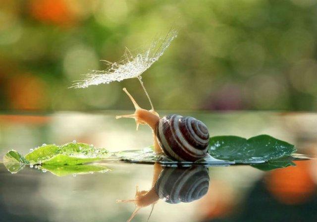 Scenarii de poveste: Cele mai frumoase poze cu melci - Poza 10