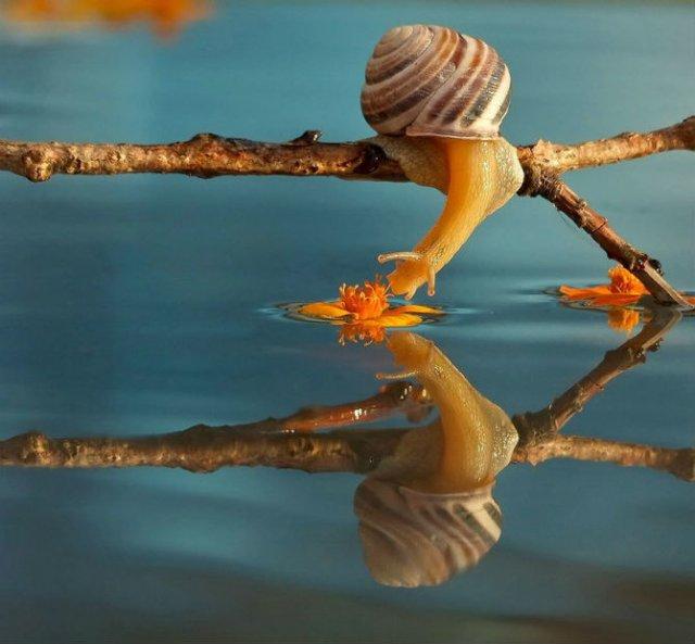 Scenarii de poveste: Cele mai frumoase poze cu melci - Poza 2
