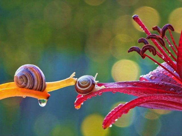 Scenarii de poveste: Cele mai frumoase poze cu melci - Poza 3