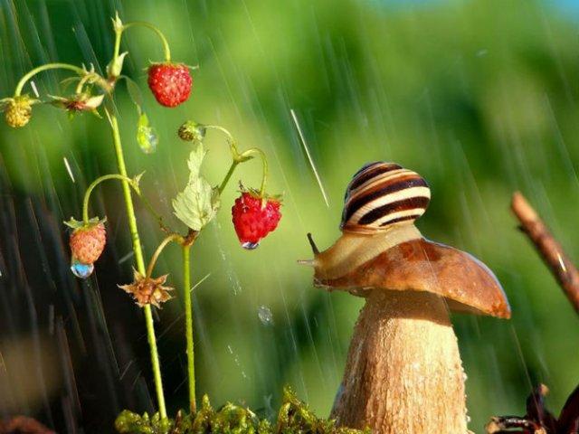 Scenarii de poveste: Cele mai frumoase poze cu melci - Poza 4