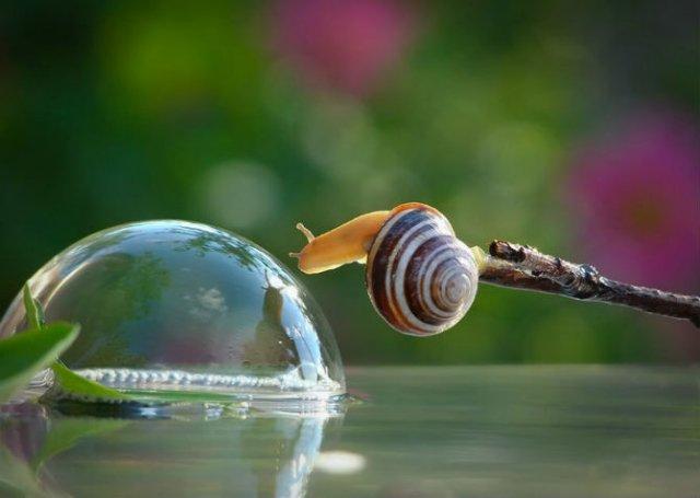 Scenarii de poveste: Cele mai frumoase poze cu melci - Poza 5
