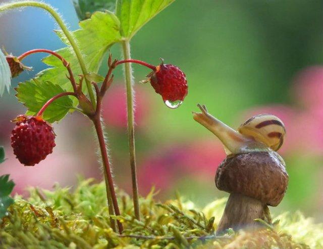 Scenarii de poveste: Cele mai frumoase poze cu melci - Poza 6