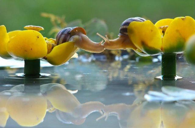 Scenarii de poveste: Cele mai frumoase poze cu melci - Poza 8