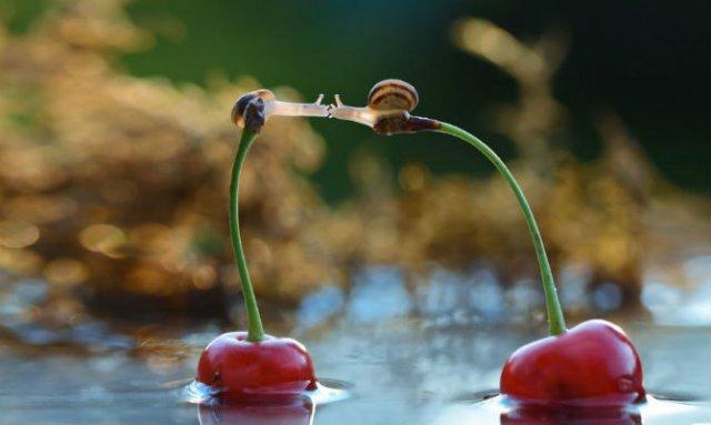 Scenarii de poveste: Cele mai frumoase poze cu melci - Poza 9